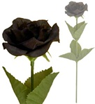 Single Black Rose